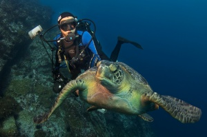 Enric Sala diving with a green turtle