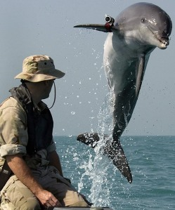Navy Dolphin K-dog