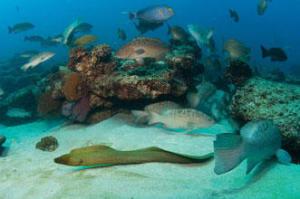 Baja marine park