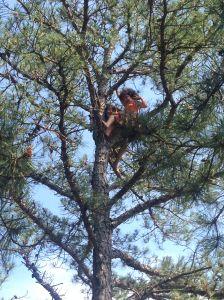 Dvora & Rafi Meitiv up a tree